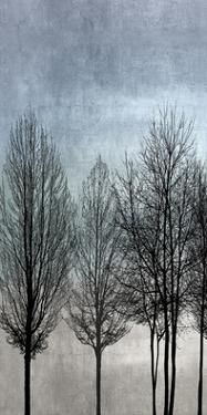 Tree Silhouette I by Kate Bennett