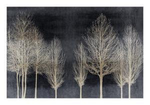 Trees on Dark Gray by Kate Bennett