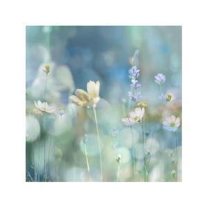 Morning Meadow II by Kate Carrigan