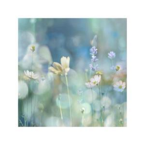 Morning Meadow II by Kate Carrigan