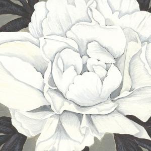 Pure Peony II by Kate Mawdsley