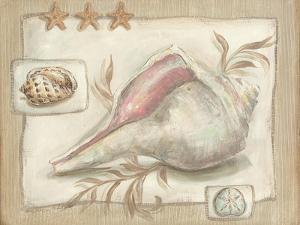 Sandy Shells II by Kate McRostie