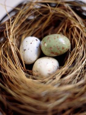 Eggs in Nest by Kate Mitchell