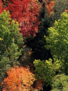 Deciduous Trees in their Autumn Glory by Kate Thompson