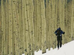 Man on Skis Touring an Aspen Glade in the Snow by Kate Thompson