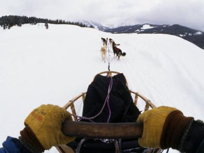 Musher Sledding with a Team of Dogs, Jackson Hole, Wyoming