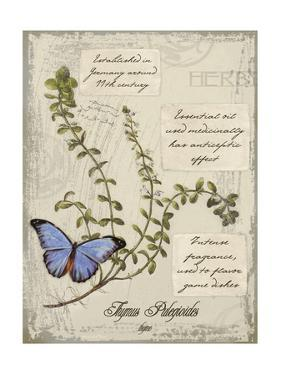 Herbs & Butterflies III by Kate Ward Thacker