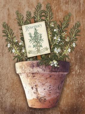 Potted Herbs II by Kate Ward Thacker