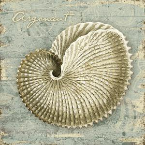 Weathered Shells II by Kate Ward Thacker