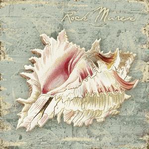 Weathered Shells III by Kate Ward Thacker