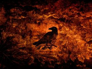 Raven in the Acanthus by Katherine Sanderson