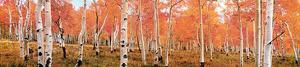 Autumn Trees by Kathleen Norris Cook