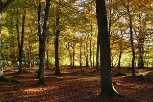 Interior of Autumn Woodland by Kathy Collins