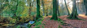 Sunlit Woodland, Birks O'aberfeldy, Perthshire by Kathy Collins