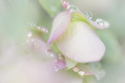 Dew Covered Oregano by Kathy Mahan