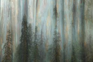 Forest II by Kathy Mahan