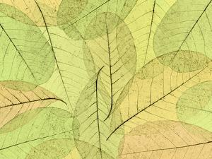 Leaf Collage I by Kathy Mahan