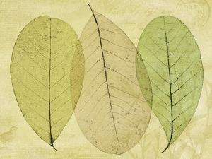 Leaf Collage II by Kathy Mahan
