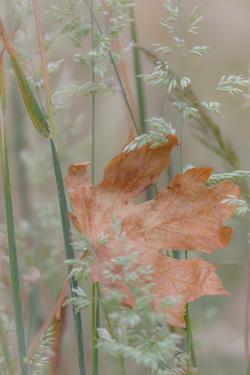 Leaf in Meadow II by Kathy Mahan