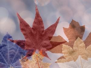 Leaf Patterns II by Kathy Mahan