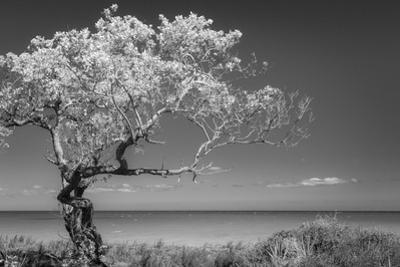 Lone Tree I by Kathy Mahan