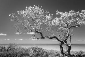 Lone Tree II by Kathy Mahan