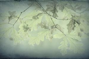 Oak Leaves by Kathy Mahan