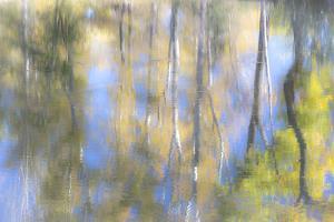 Tree Reflections I by Kathy Mahan