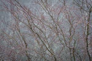 Winter Tree Limbs II by Kathy Mahan