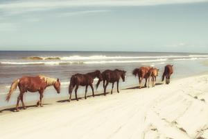 Horses on the Beach by Kathy Mansfield