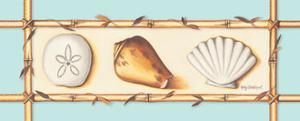Seashells by Kathy Middlebrook