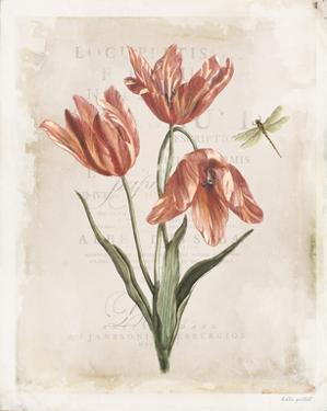 Antiquarian Blooms III by Katie Pertiet