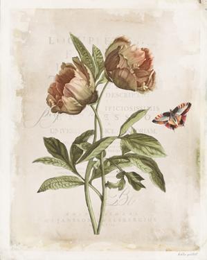 Antiquarian Blooms VI by Katie Pertiet