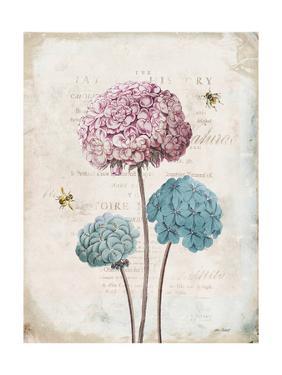 Geranium Study I Pink Flower by Katie Pertiet