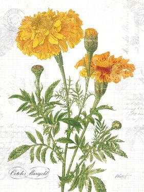 October Marigold on White by Katie Pertiet
