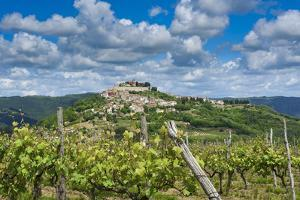 Vineyards, Motovun, Istria, Croatia by Katja Kreder