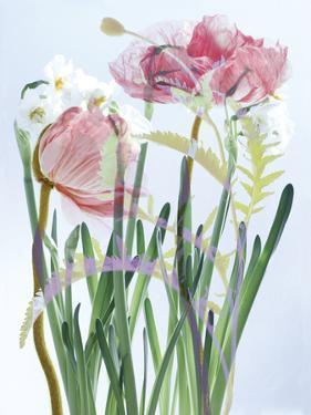Luminous Layers I by Katja Marzahn