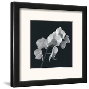 Orchid Illusion I by Katja Marzahn