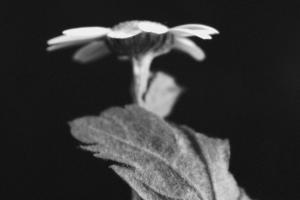 Resonance (Black and White) by Katja Marzahn