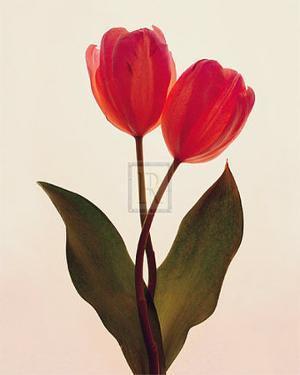 Transparent Beauty I by Katja Marzahn