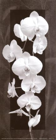 Orchid Opulence II by Katrina Craven