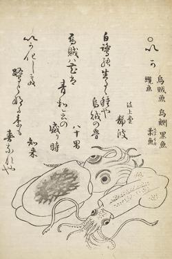 Squid by Katsuma Ryusai