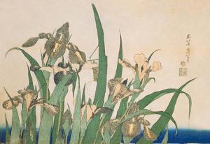 Irises and Grasshopper by Katsushika Hokusai