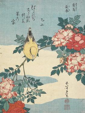 Japanese Nightingale and Spray of Roses, C. 1832 by Katsushika Hokusai