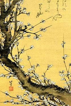 Katsushika Hokusai Flowering Plum Tree by Katsushika Hokusai