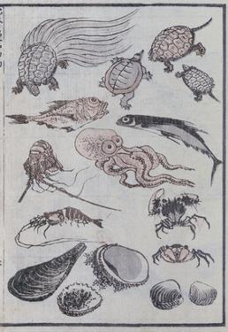 Undersea Creatures, from a Manga (Colour Woodblock Print) by Katsushika Hokusai