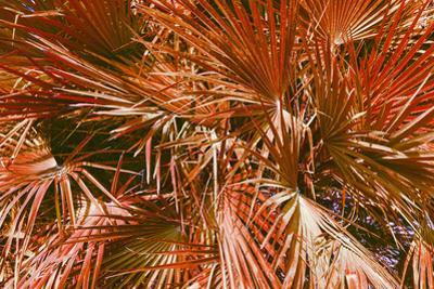 Urban Orange - Tropical Palm Leaves by Katya Havok