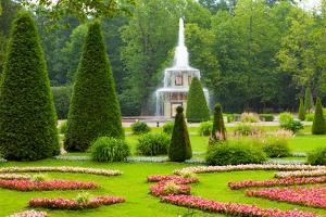 Peterhof Palace. Roman Fountain of the Lower Park in the Rain by kavalenkava volha