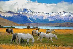 Beautiful White and Gray Horses Grazing in a Meadow near the Lake. on the Horizon, Towering Cliffs by kavram