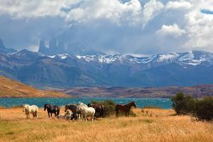 Chilean Andes. Fabulous Lake Laguna Azul. in the Distance Visible Rocks Torres Del Paine.  on the L by kavram